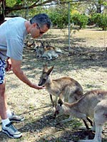 Tom feeding kangaroos